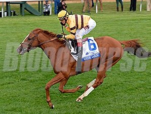 Wise Dan won the 2014 Shadwell Turf Mile.