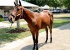 Fasig-Tipton July Sale: Mark Taylor
