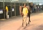 Cape Thoroughbred Sale - Andreas Jacobs