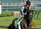 Preakness: Todd Quast on Mylute's Chances
