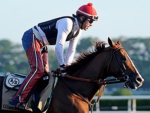 Assault, Secretariat, Affirmed Lead 'Chrome'