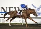 Hunter's Light Bids for Repeat at Meydan