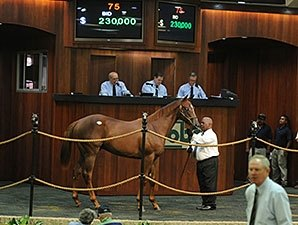 Big Drama Colt Leads OBS Select Session