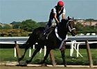Belmont Stakes News Update for June 1, 2014