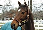 Kona Gold at the Kentucky Horse Park