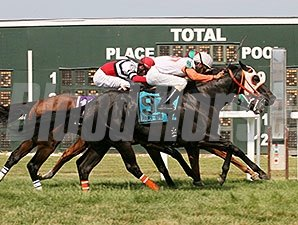 Ben's Cat comes running late to win the Parx Dash Handicap.