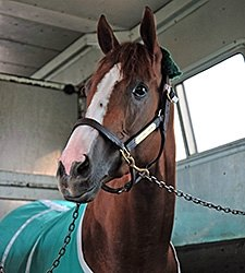 California Chrome Arrives at Churchill Downs