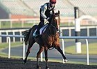 Dubai World Cup: Training March 29, 2013 Part II