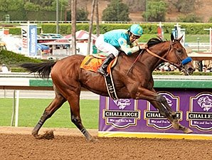 American Pharoah Easy Winner Of Frontrunner Bloodhorse Com