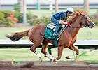 California Chrome Work and Interviews 08/22/2014