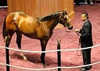 Fasig-Tipton KY Sale: Recap (Video)
