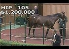 Keeneland September Yearling Sale 2014 - Hip 105