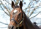 Take Charge Lady Kentucky Broodmare of Year