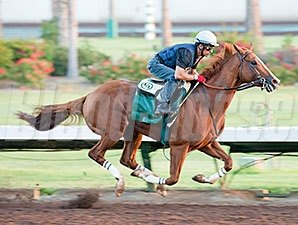 California Chrome works at Los Alamitos.