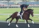 Dubai World Cup: Morning Training 03/26 Part I