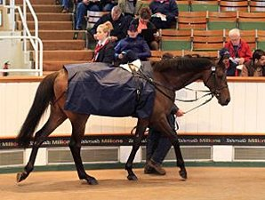 Tattersalls July Sale Ends on High Note