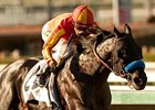 Shakin It Up Retired, To Stand at Spendthrift