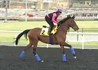 Dubai World Cup: March 25 Morning Training II