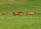 USDA Census Finds Less Value in U.S. Horses