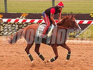 California Chrome galloped at Pimlico on May 14.