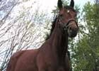 Past Derby Winners: Big Brown