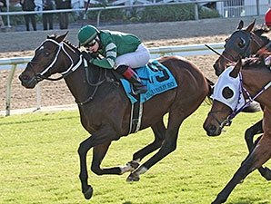 Daddy Nose Best Enters Fair Grounds on Roll