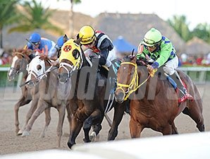 Wildcat Red (right) finished 2nd in the Gulfstream Park Derby.