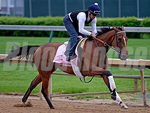 "Empress of Midway worked four furlongs in :49 4/5 at Churchill Downs on April 25,2014. <br><a target=""blank""http://photos.bloodhorse.com/TripleCrown/2014-Triple-Crown/Kentucky-Derby-Workouts/i-ZHdSxF3"">Order This Photo</a>"
