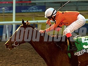 Asserting Bear won the Nov. 17 Coronation Futurity on the Woodbine Polytrack.