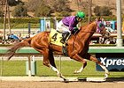 California Chrome 'Tight Enough' for Dubai
