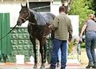 Belmont Stakes: Ride On Curlin Bath