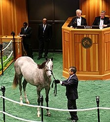 Tapit Filly Brings $1 Million at F-T Saratoga
