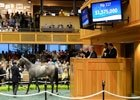 Fasig-Tipton The Saratoga Sale 2012: Day 2 Wrap-Up