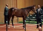 2012 Keeneland September Yearling Sale Day 4 Recap