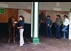 Mine That Bird, Funny Cide at Churchill Downs
