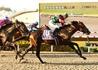 Tamarando Tries Turf in Snow Chief Stakes