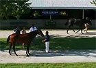 Keeneland September Yearling Sale Preview 2014