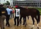 2013 Kentucky Derby: Walkover with Orb