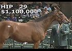 Keeneland September Yearling Sale 2014 - Hip 29