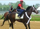 Preakness Stakes News Update for May 14, 2014