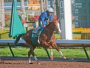 California Chrome Draws Crowd for Los Al Work