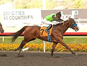 Starlet Winner Streaming Back in Las Virgenes