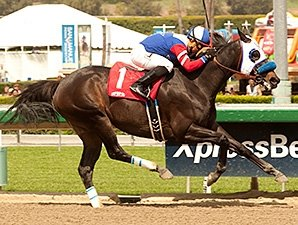 Halo Dolly Registers 10th Career Stakes Win