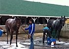 KY Derby - Bath Time for Frac Daddy and Java's War