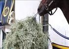 Breeders' Cup: Paynter Munches On Hay