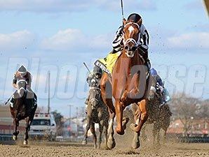My Miss Sophia runs away from the competition in the Gazelle Stakes.
