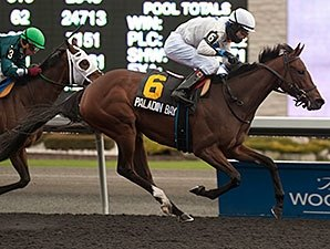 Paladin Bay Seeks to Tame Bison City Stakes