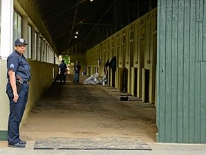 Enhanced Security Measures for Belmont Horses