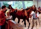 Keeneland September Yearling Sale: Walt Robertson