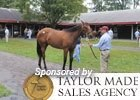 Fasig-Tipton Saratoga Preview 2011